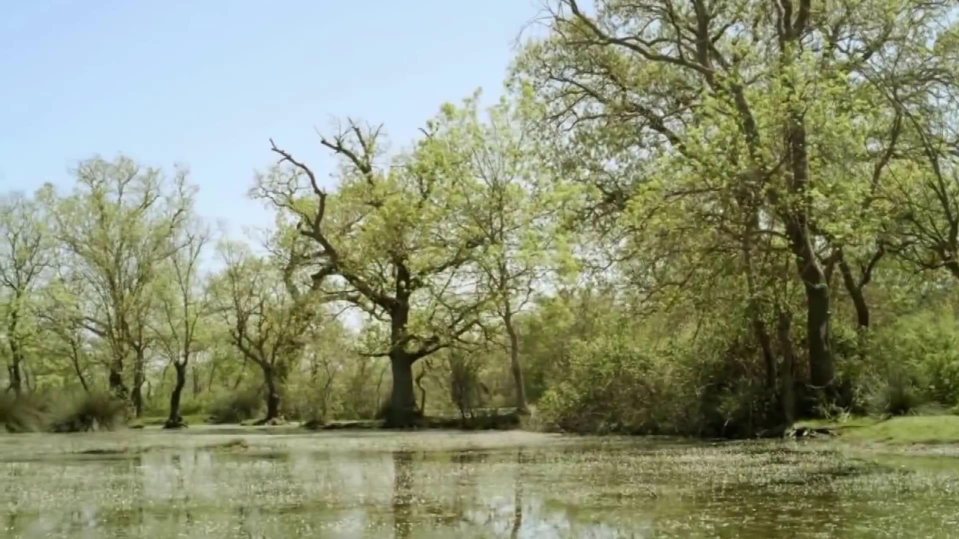 Bursa Karacabey Longoz Ormanları